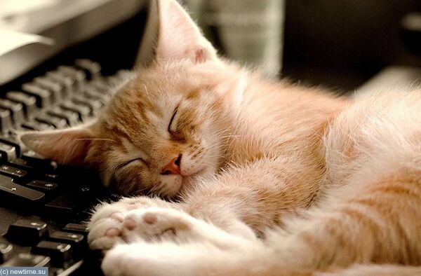 sleeping_cat_cute_little_kitty_cat_living_wallpaper_1600x1200_9A56C